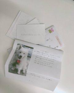 心音お手紙
